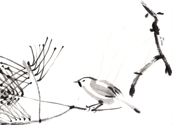 Angry titmouse on a pine branch